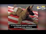 Невероятная история собаки, которую хотели усыпить