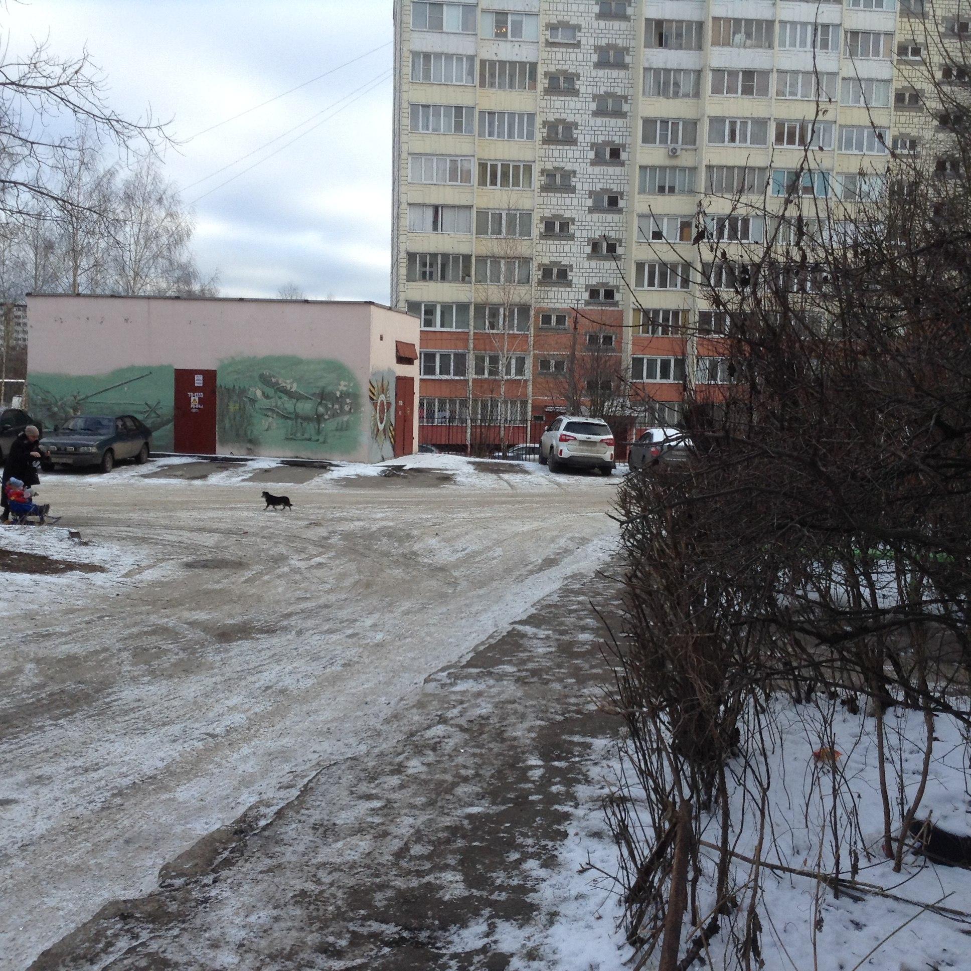 На ул Первомайской бегает маленькая чёрная собачка в ошейнике, замарзшая и пугливая ( район д 23 )
