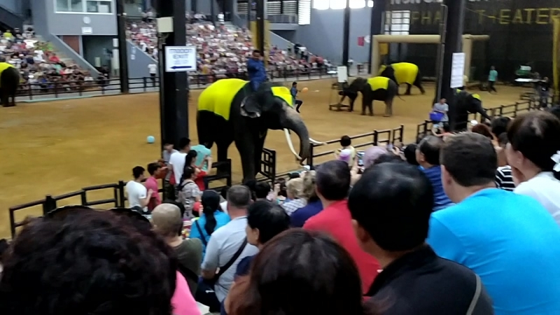 Парк Нонг Нуч.Шоу слонов. Паттайя.