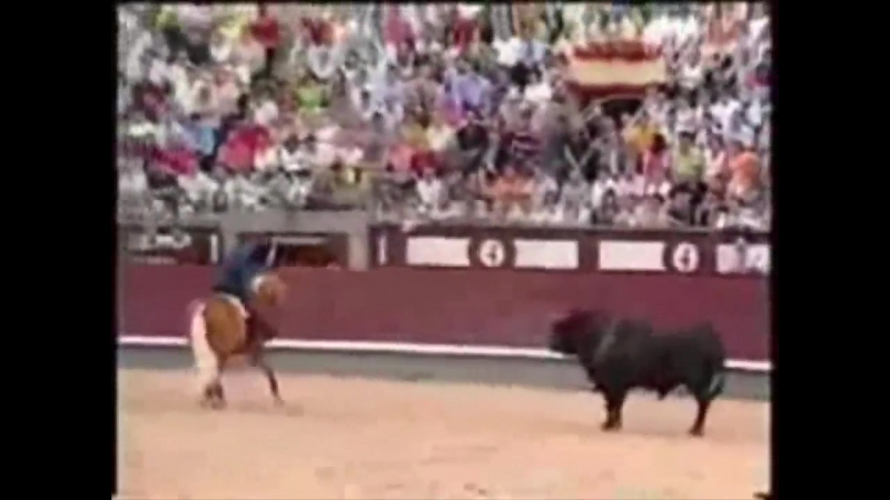 Лошади! Что делает эта лошадь_ Вау! Лошадь vs бык ( 1080 X 1440 ).mp4