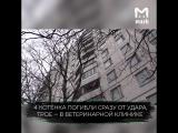 Москвичка выбросила 7 котят с балкона 8 этажа своей квартиры