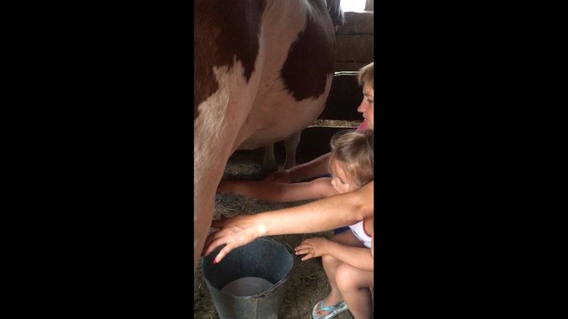 Уроки доения коровы