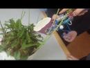Пневматическая рука допустим что поливаем опасное растение