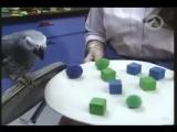 Алекс самый умный попугай планеты Говорящий попугай