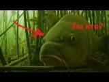 Карпуша и подводная камера. Кто кого переглядит.