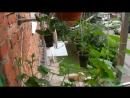 Огород на балконе в Ступино