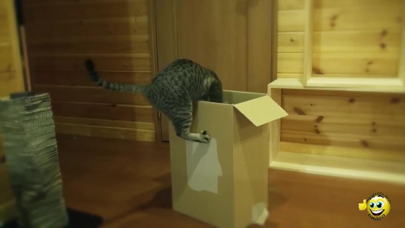Кот Мару и Ханна в коробке