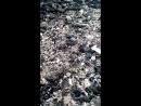 спаривание мати пчел листорезов