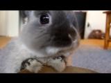 Интересные факты о кроликах!