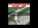 Самые смешные видео про котов Супер приколы! Выпуск 5