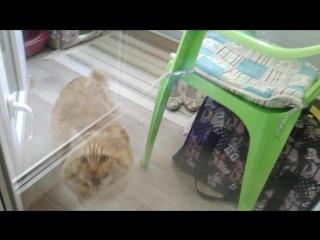 гостиница для кошек зоогостиница МяуСити Кузя