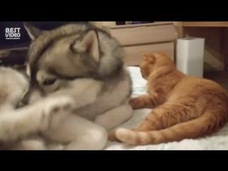 Кот упал