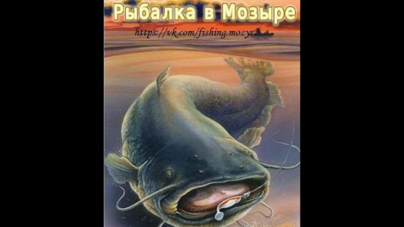 Рыбалка 19.11.2017 (Мозырь)