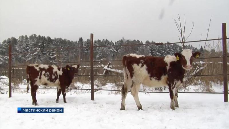 Развитие животноводства