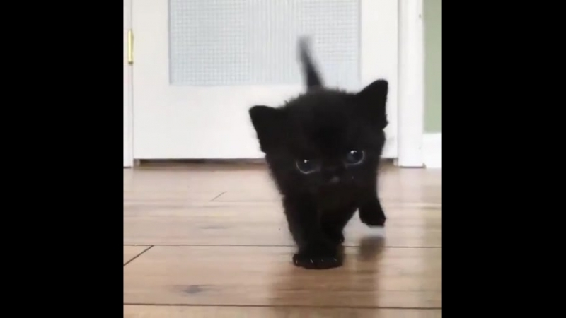 Tiny darkness learns how to walk