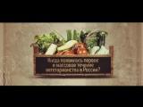 Когда появилось движение вегетарианства в России??