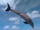 Казан Казиев - Дельфины