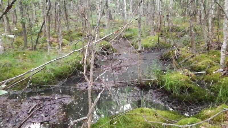 Зубцовское болото