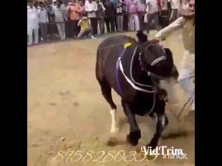 Удивительный красивый танец лошадки