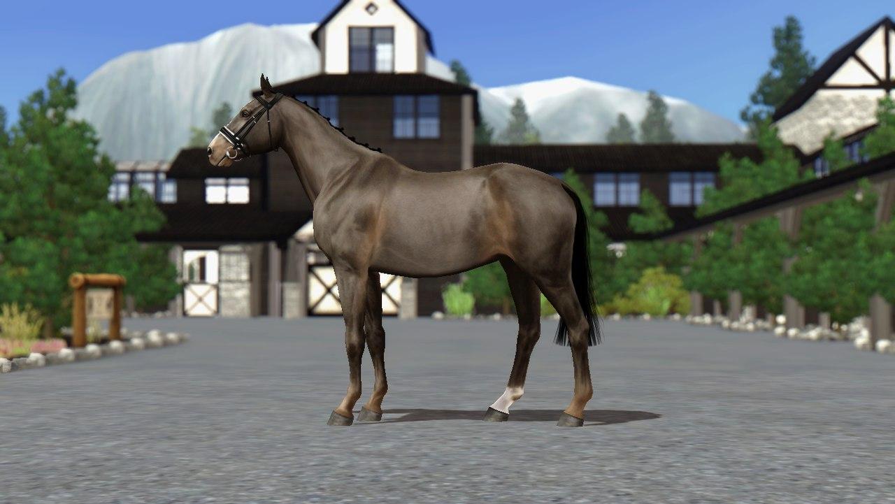 Регистрация лошадей в RHF 2 - Страница 8 RkOL7CXG-1c