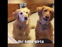 улетное видео собаки поднимают настроение