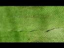 Дебри сказочной тайги из рыбьей кожи лосося цвета Сибирская ель
