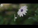 Әйел жүрегінің кілті - Жаңа ролик - Асыл арна
