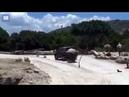 Shocking moment rhino rams familys car during safari park visit