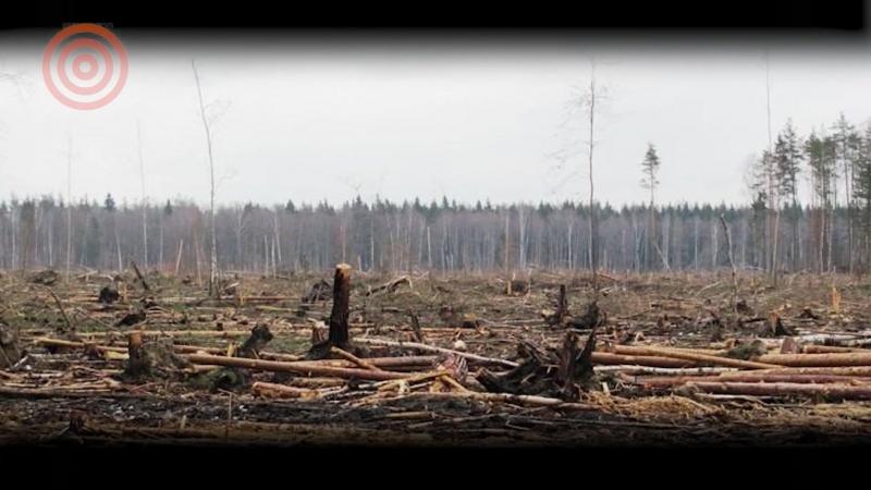 Китайская оккупация лесов Сибири, зачем в Башкирии обняли гору, радикализм в Ядрово заставляет бизнес отступать