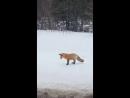 Охота (VHS Video)