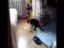 канапля сводит кошек с ума