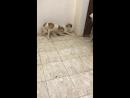 Напугал до смерти собак.😃