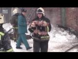 Пожарные спасают хрюшек