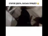 Кот Васька просит открыть дверь.