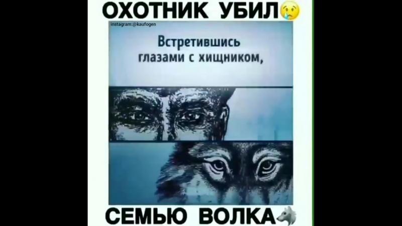Охотник убил семью волка