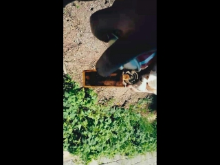 промывка бензонасос