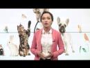 Как выбрать ветеринара для своего питомца