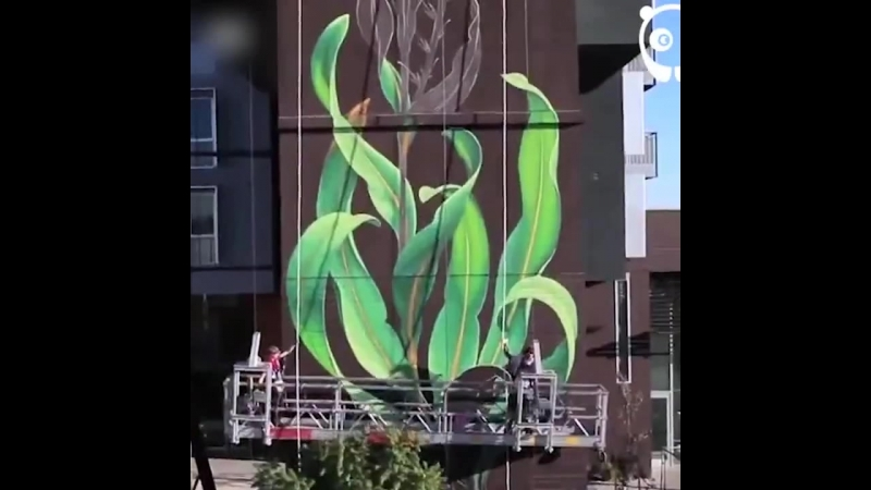 Безумно красивое уличное искусство VIDEO ВАРЕНЬЕ