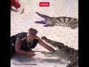 Крокодил чуть не откусил руку дрессировщику на шоу в Тайланде.