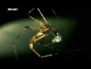 Войны жуков гигантов Monster bug wars 08