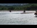 Уникальный край- Камчатка. Медведи на рыбалке, чихали они на всех вокруг.