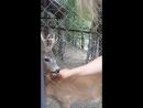 зоопарк Поляна Сказок
