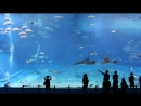 Kuroshio Sea - 2nd largest aquarium tank in the world - (song is Please Dont Go