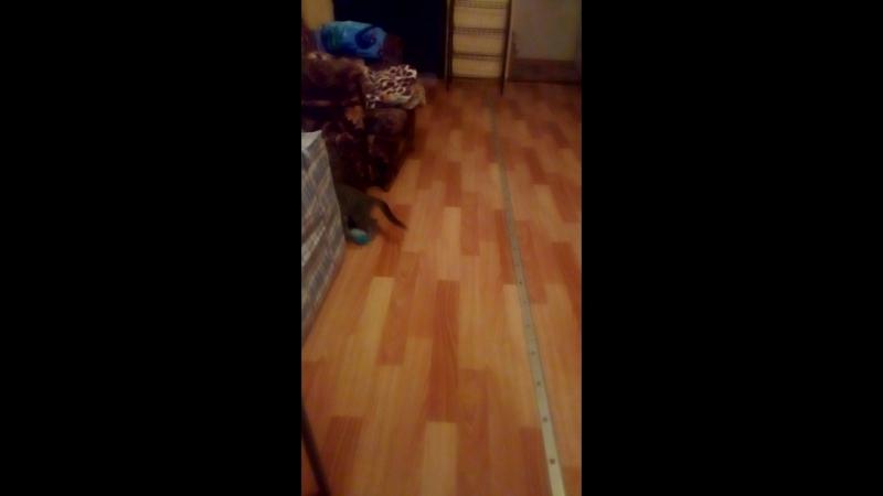 3 мес.БЕЗУМНЫЙ Макс;)