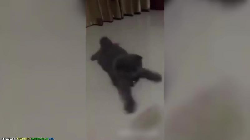 Мокрый металлический котенок (Dank metal kitty)