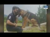 Chi ha ucciso Kaos, il cane eroe di Amatrice Ora il testimone passa alla sua cucciola