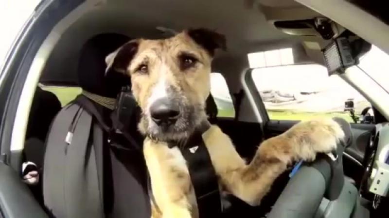 Нет умных собак - это бывшие люди _ Your dog was human (sub)