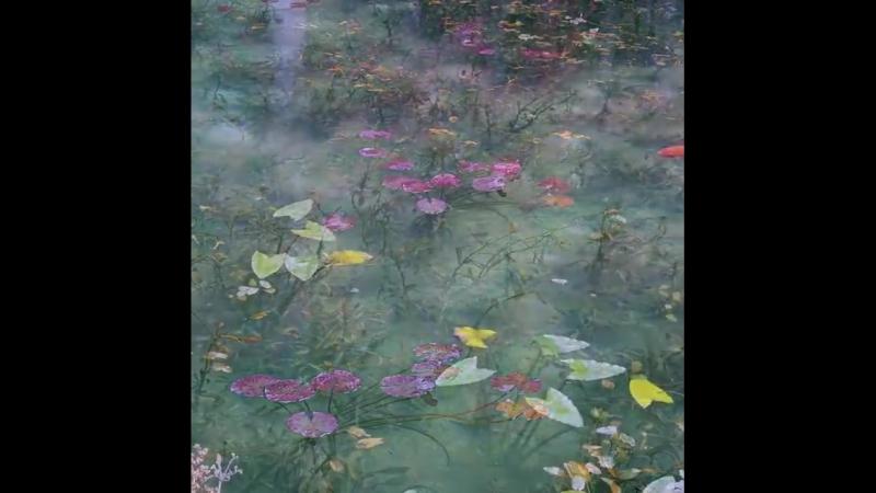 Monet's Pond, Seki City, Gifu Prefecture, Japan