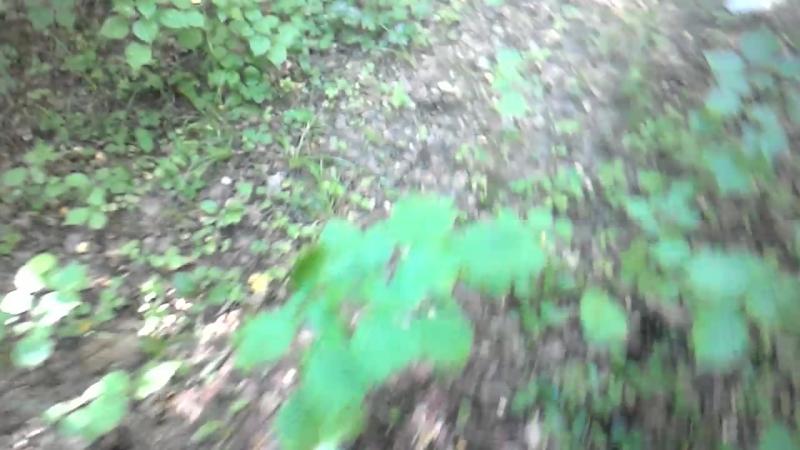 Таруса дремучий лес 13 07 2018