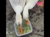 Жили у бабуси два голодных гуся